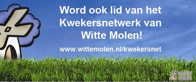 witte molen website banner